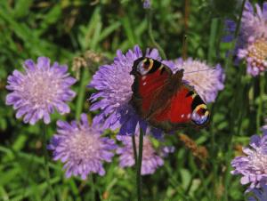 La biodiversitat com a valor essencial per a construir territori
