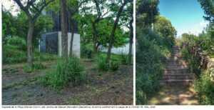 Imatges de l'estats de la vegetació durant el confinament a la Plaça Alfonso Comín i al Jardins de Manuel Blancafort de Barcelona