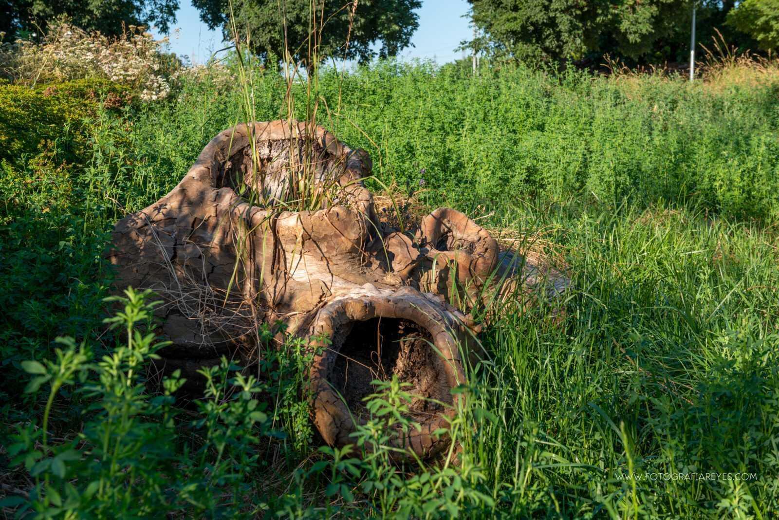 Detalle del tronco presente en la rotonda