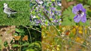 Imatges d'algunes de les espècies trobades a la plaça de les Glòries